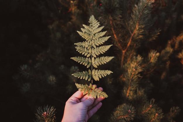 Uma folha de samambaia verde em uma mão feminina na floresta de outono