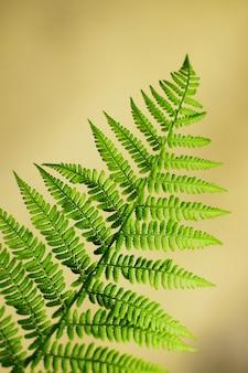 Uma folha de samambaia verde na floresta. rica vegetação natural da floresta.