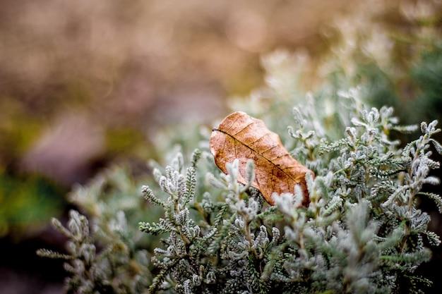 Uma folha seca e marrom na grama. fim do outono no jardim