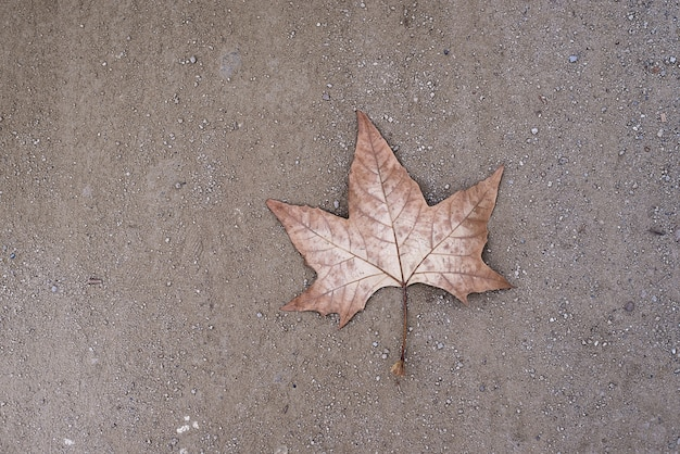 Uma folha seca solitária no chão