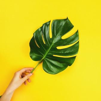 Uma folha tropical do monstera do filodendro na mão de uma menina. postura plana, imagem quadrada, tonificada