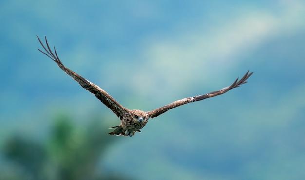 Uma foto de close de uma águia voando com um fundo desfocado