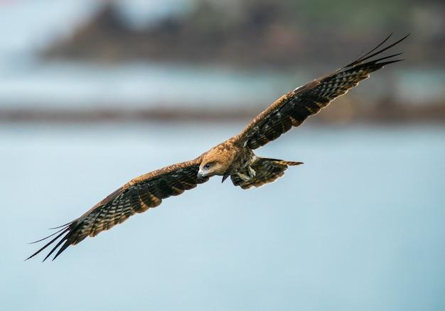 Uma foto de close de uma águia voando pelo céu com as asas abertas