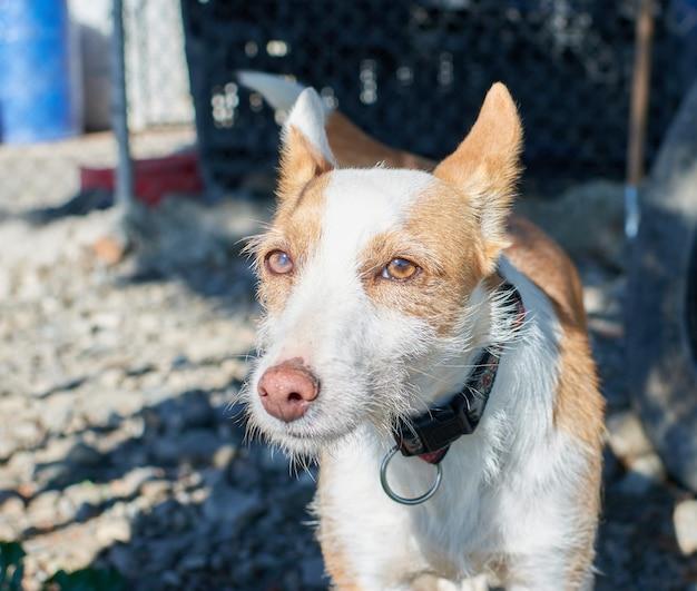 Uma foto de close-up de um cachorro magro de rua de pé em um solo de cascalho