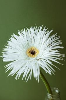Uma foto de close up de uma natureza morta de flor branca em uma composição estética de fundo verde pastel