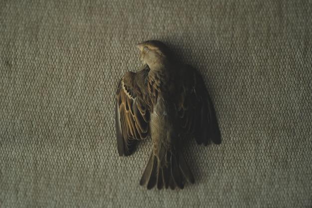 Uma foto de um pardal morto