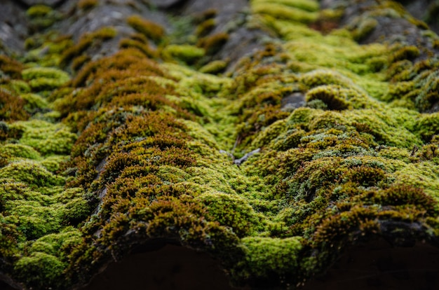 Uma foto em close de um telhado coberto com fundo de musgo