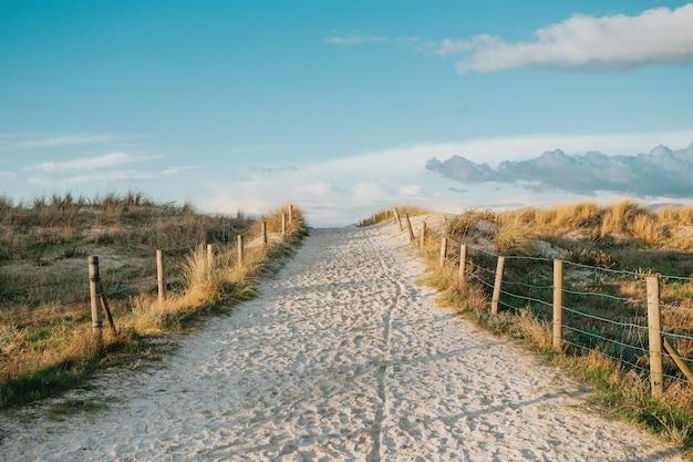 Uma foto grande angular do caminho de areia até a praia cercada por plantas em um dia claro de primavera