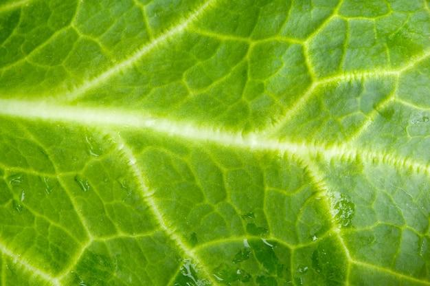 Uma foto macro de folha verde alface e fresco
