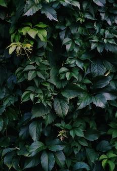 Uma foto vertical de folhas verdes profundas cobrindo a parede