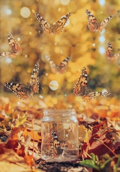 Uma fotografia mágica borboletas voando para fora de uma garrafa transparente contra o fundo de um