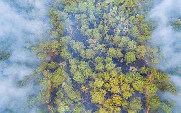 Uma fumaça de incêndio florestal saindo de uma floresta cheia de diferentes tipos de plantas verdes