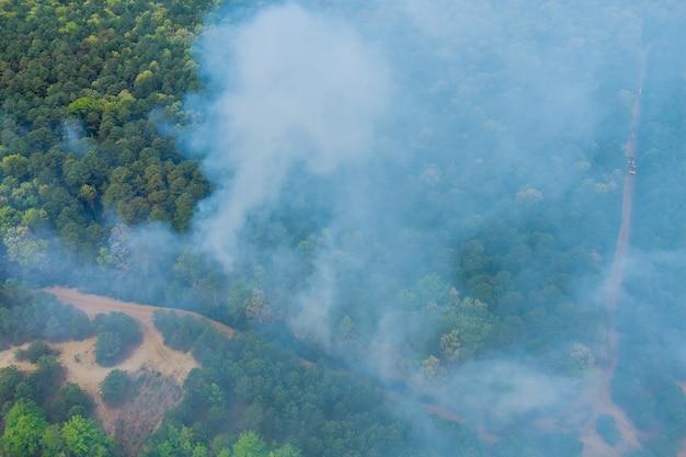 Uma fumaça saindo de uma árvore em chamas na floresta