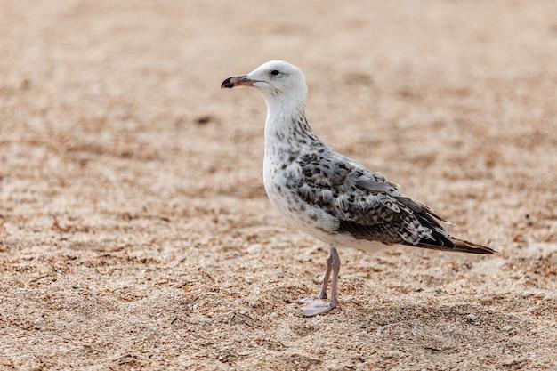 Uma gaivota à beira-mar