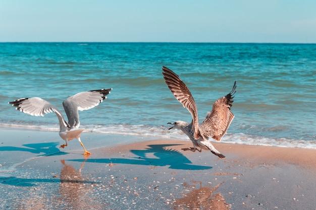 Uma gaivota branca grande persegue outro pássaro à beira-mar em um dia ensolarado