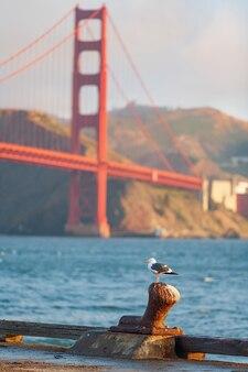 Uma gaivota em foco no primeiro plano fora de foco no fundo da golden gate bridge