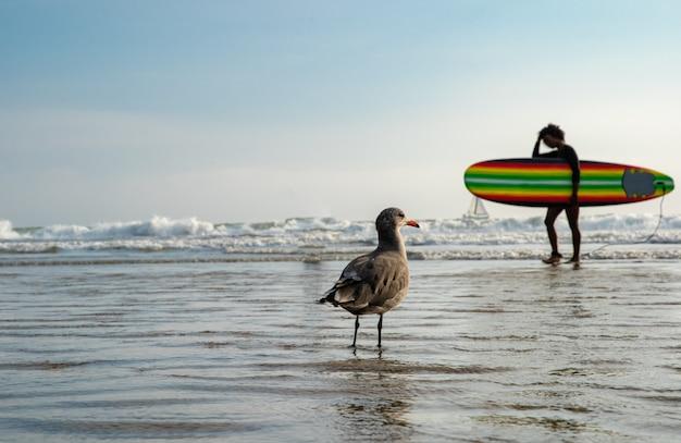 Uma gaivota em uma praia pública à beira-mar, observando pessoas tomando banho e surfistas
