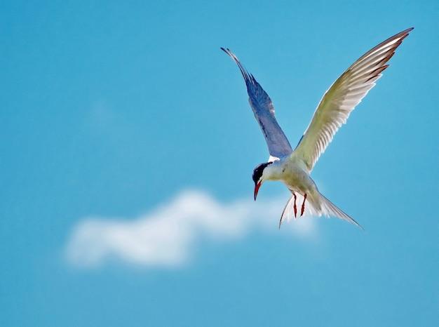 Uma gaivota está voando no céu