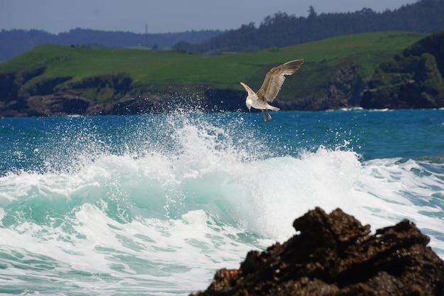 Uma gaivota pescando na costa
