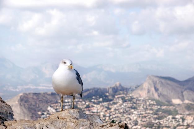 Uma gaivota sentada em uma rocha no topo de uma montanha, uma paisagem ao fundo