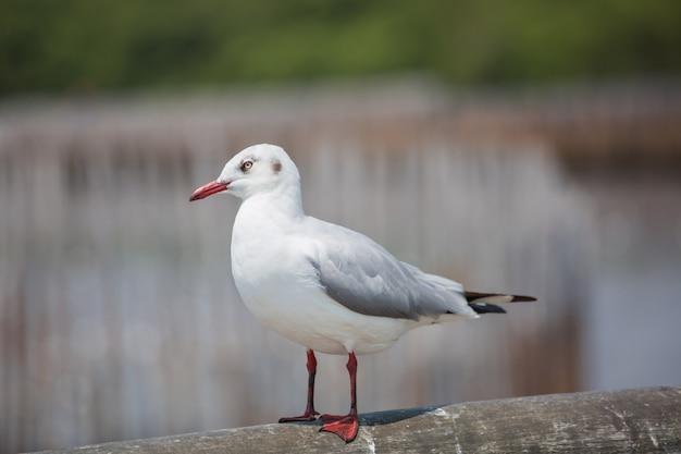 Uma gaivotas fica na ponte de concreto à beira-mar.