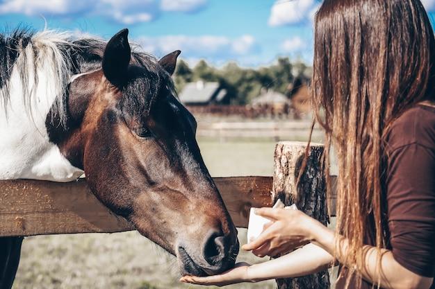 Uma garota alimenta um cavalo com suas mãos