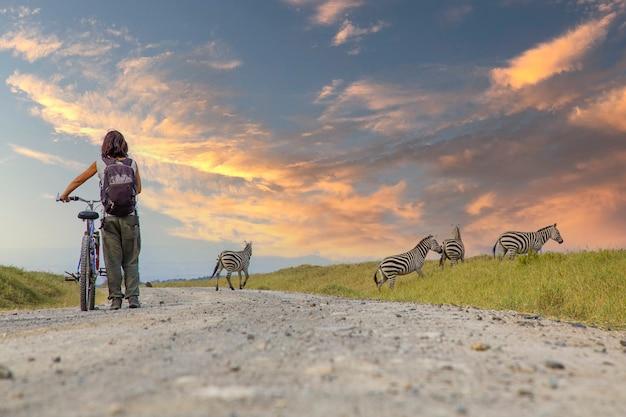 Uma garota em uma bicicleta ao lado de zebras em naivasha em hells gate park ao pôr do sol, quênia