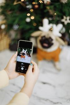 Uma garota fotografa um cachorro ao telefone perto de uma árvore de natal