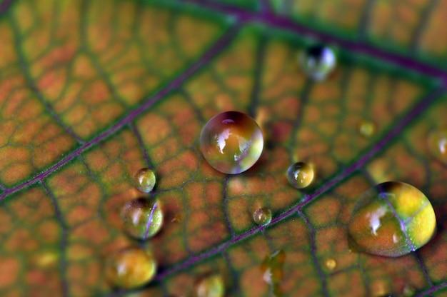 Uma gota de água em uma folha verde