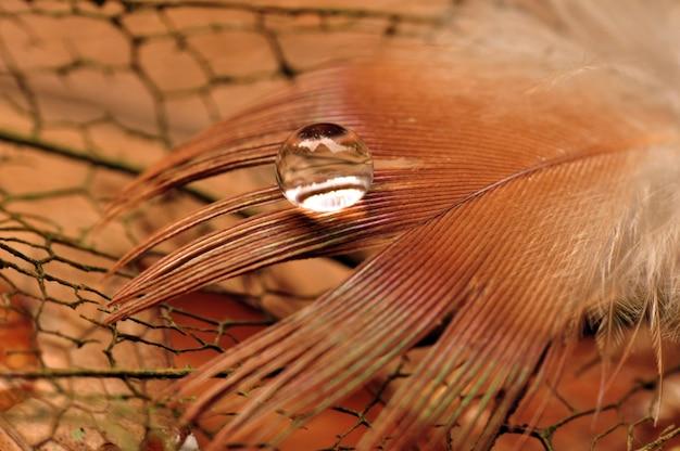 Uma gota de água em uma pena fofa