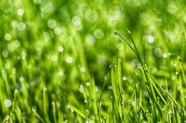 Uma grama verde de fundos