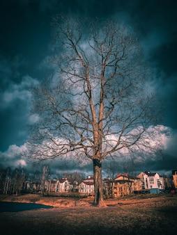 Uma grande árvore na colina em frente à vila de chalés. toning.