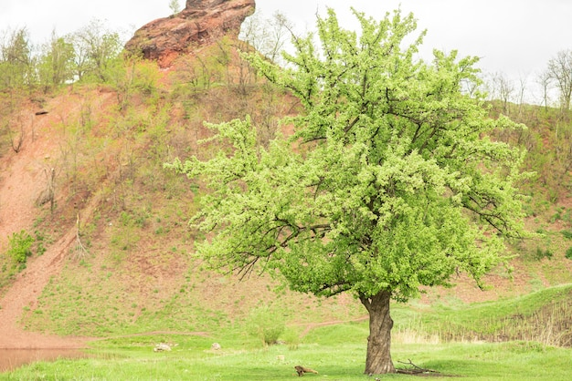 Uma grande árvore solitária com muitas folhas verdes perto da pilha