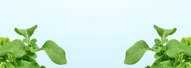 Uma grande faixa com duas plantas jovens em uma superfície azul