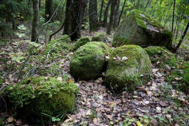 Uma grande pedra na floresta, coberta com musgo verde e folhagem de outono. grupo de conto de fadas, uma pilha de pedras na floresta de outono. fotografia de fundo. foto de alta qualidade