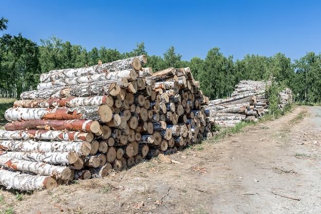 Uma grande pilha de árvores caídas na orla da floresta em um dia ensolarado