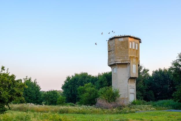 Uma grande torre de água abandonada e solitária entre as árvores. manhã de verão. pássaros no telhado.