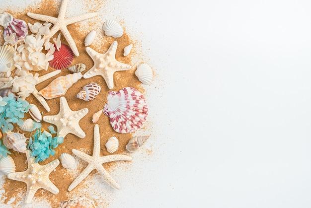 Uma grande variedade de conchas e estrelas do mar na areia da praia em um fundo branco.