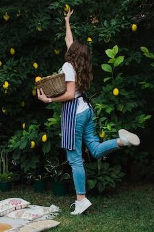 Uma jardineira com um avental listrado azul, de costas para a câmera, colhe um limão maduro de uma árvore