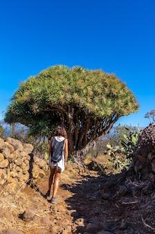 Uma jovem em um dragão gigante na trilha las tricias. cidade de garafia no norte da ilha de la palma, nas ilhas canárias