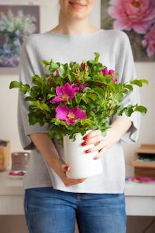 Uma jovem embaçada não identificada tem um vaso nas mãos com uma linda rosa mosqueta de flores rosa. o conceito de decoração de interiores e plantas de sala de reprodução