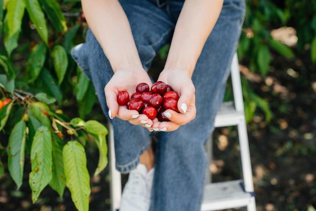Uma jovem tem nas mãos um close de uma cereja doce madura vermelha em um dia de verão