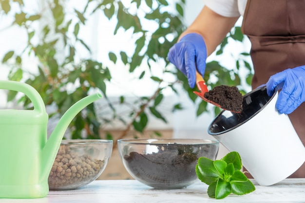 Uma jovem transplante plantas em outro pote em casa. ferramentas de jardinagem em casa.