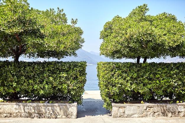 Uma lacuna entre arbustos verdes e árvores com vista para o mar, montanhas e céu azul