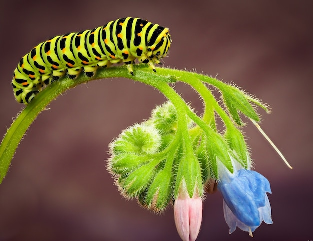 Uma lagarta rasteja em uma flor