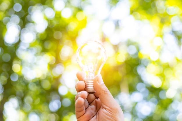 Uma lâmpada que cresce no conceito de energia na natureza e espaço de cópia.