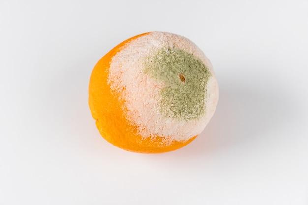 Uma laranja mofada isolada no fundo branco.