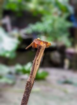 Uma libélula vermelha descansando em um tronco de árvore morta