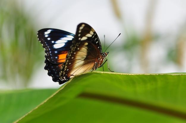 Uma linda borboleta.