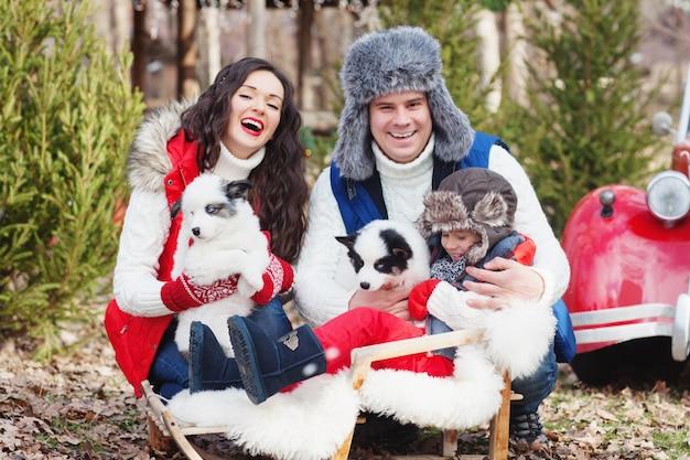 Uma linda família com uma criança em um trenó e dois cachorrinhos husky rindo no cenário de árvores de natal